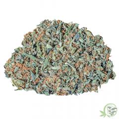 Premium Weed Trim: Zombie Kush at Sacred Meds