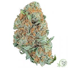 Strawberry Cough Weed Strain at SacredMeds