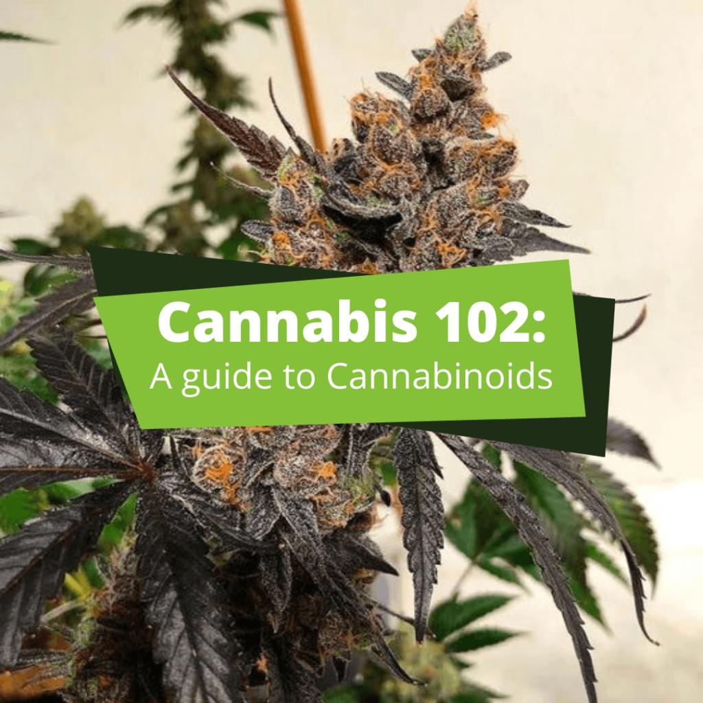 Cannabinoids cannabis