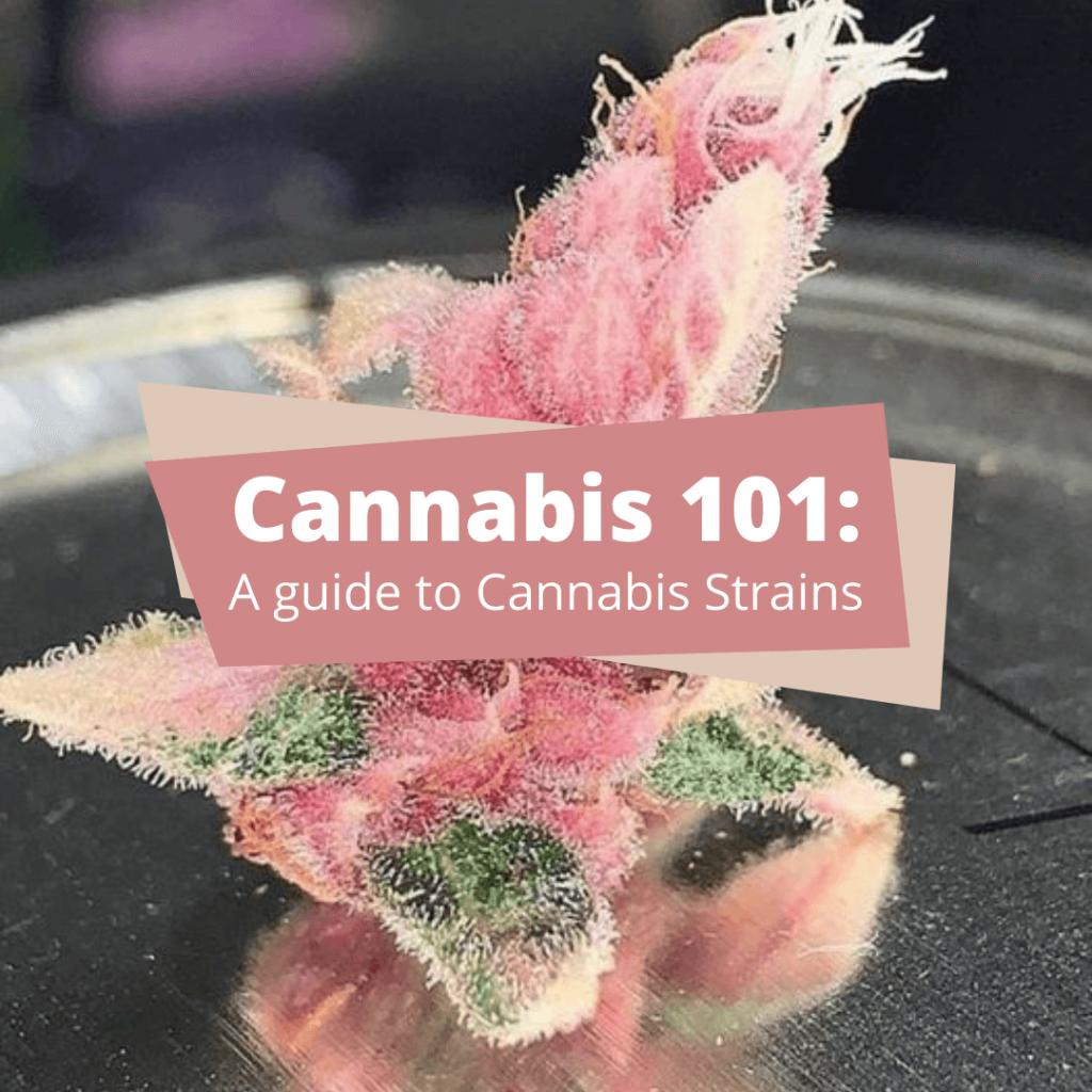 cannabis strains guide