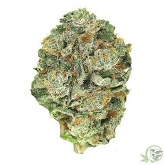 OG Kush Alien Balanced Cannabis Hybrid Strain