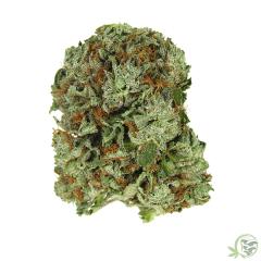 Kush Master Cannabis Marijuana Strain